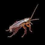 scarafaggio2-removebg-preview
