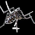 zanzara-tigre-removebg-preview